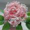 rózsa (frivolitással)1