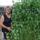 Zöldborsóm meghaladta a 2 m. magasságot