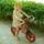 Kata bringás képei