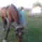 lovak 1