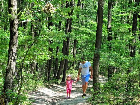 Károlyfalvai erdőben