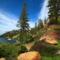 Norfolk szigeti fenyők