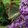 Pillango_nyari_orgonan-001_1861158_8927_t