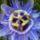 Erzsike saját virág