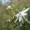 Kéked felé Árenda rététn virág