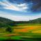 Napsütötte legelő (Alsóörsi táj)