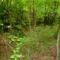 Nyáras-sziget (Nyáros-sziget?, Bugyi-sziget?, Süli-sziget?) 2014. július 25.-én