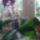 Orchidea-002_1864019_6332_t