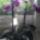 Orchidea-003_1864020_4041_t