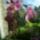 Orchidea-004_1864021_2324_t