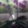 Orchidea-005_1864022_4456_t