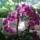 Orchidea-006_1864023_8525_t