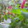 Sályi Erzsike virágai