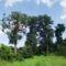 Sóstói-erdő