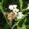 Sóstói-erdő méh