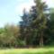 Sóstói-erdő tisztás