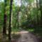 Sóstói-erdő út