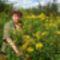 aranyvesszős virágok az Igrice-csatorna ösvényén