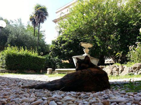 San Cosimato Trastevere kerengő4