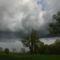 Jékely Zoltán: Vihar előtt az erdőn