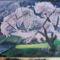 Cseresznyefa virágzás 001