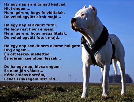 kutya-idezet