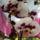 Phalaenopsis___hibrid_lapkeorchidea_1869487_2474_t
