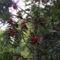 Tuzson Botanikus kert (17)