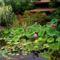 Tuzson Botanikus kert (19)