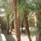 A szent tó, pálmafákkal