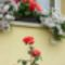 Ablakom virágaim