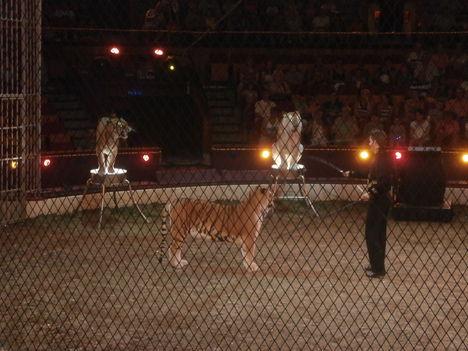 Cirkusz Classius előadását láttuk 14