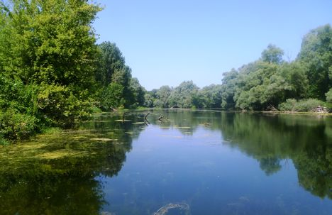 Szigetköz a Bagaméri Duna-ág 2014. július 17.-én