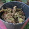"""Vanda coerulea ebben a """"cserépben"""" és ültetőközegben érkezett - 2014.06.27."""