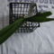 Vanda coerulea új növénytartója egykoron Physalis gyűmölcs kosara volt - 2014.06.27.