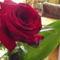 Névnapi rózsám.
