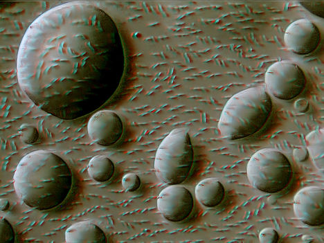 Buborékok, bacilusok 3d
