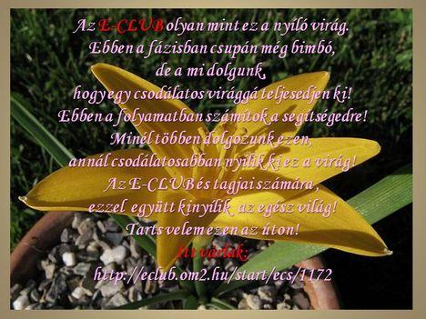E-club a nyíló virág