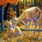 Őszi erdő-18064
