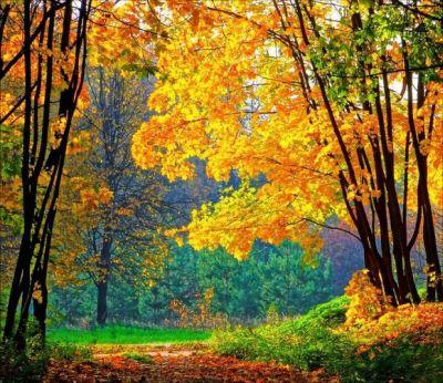 Őszi erdő...