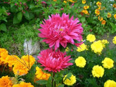 Őszi kert virágai...