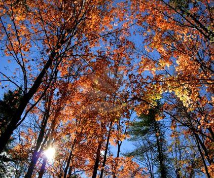 """""""Az ősz egy második tavasz, amikor minden levél virággá változik."""" (Albert Camus) """""""