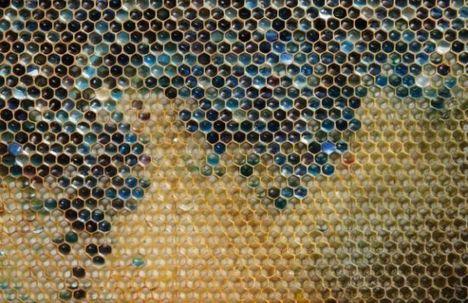 Kék színű mézet csináltak a francia méhek. Sosem találnád ki mért