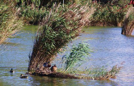 Bujtosi tó (2)