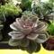 kaktuszok (11)