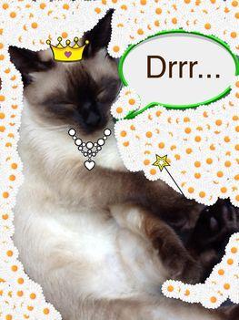 Gizmó cica mint királynõ