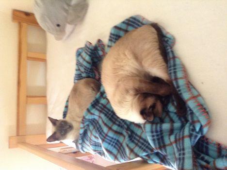 Gizmó és Tádé az emeleteságyon