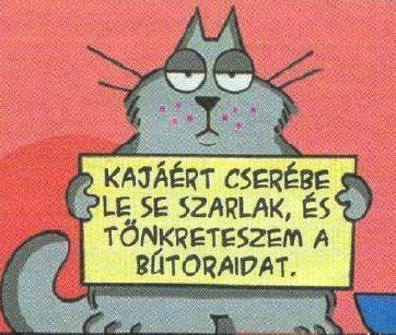 Macska erkölcs
