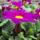 Tavaszi virágok- Váradi Péter