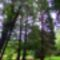 Tuzson Botanikus kert
